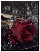 Mưa rơi