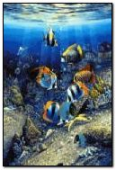 Sea World 320x480
