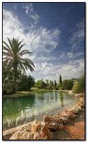 Tropic Paradise 6
