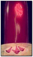 triste rosa