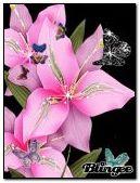 NATURE,FLOWER,Image,ROSE,ANIMATED