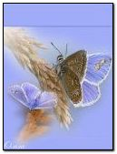 240X320,FLOWER,Image,BUTTERFLY,ANIMATED