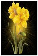पीले फूल।