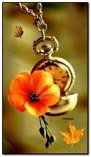 الساعة والزهرة