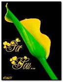 Yellow flower for you