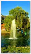 fontanna i ptaki