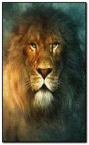 240x400 lion