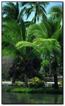 Tropic Paradise 2