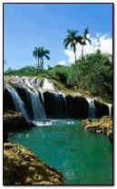 Tropic Paradise 4