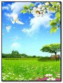bird flowers nature