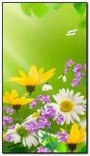 वसंत ऋतु फुले 360?640