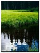 Anim Nature