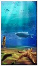 Sinh vật dưới nước