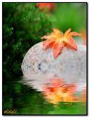 Flower on stones in water