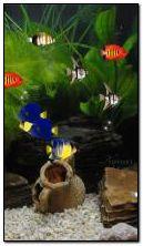 Aquarium animé