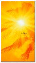 Sunny 360?640