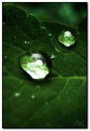 Giọt nước xanh