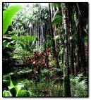 kecantikan hutan