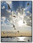 sun ray