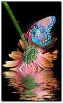 Butterfly&Flower