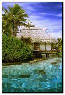 Tropic Paradise 7