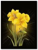 Yellow flower 240x320