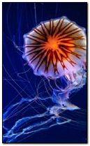 jelly fish 240x400
