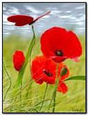Red poppies and butterfly