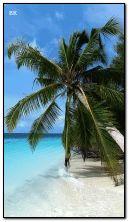 Tropik sahil