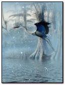 물고기 새
