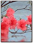 Delicate flowers on the water