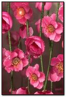 ازهار زهرية اللون