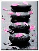 Petals on stones