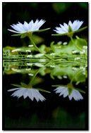 호수 옆의 하얀 꽃