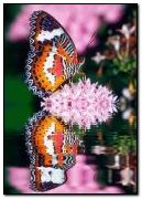 NATURE,FLOWER,Image,BUTTERFLY,ANIMATED