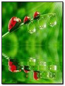 Ladybugs Across The Water