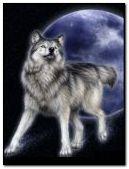 lobo de la luna