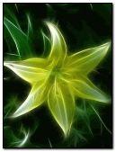 magic flower yellow