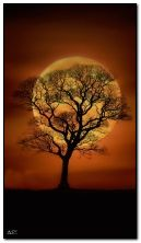 sombra de árbol