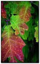 rain on leaves.