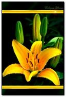 brightly yellow lily