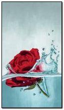 rose dans l'eau