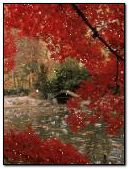 Red Nature View