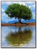 Tree Reflet