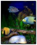 Water fish 0