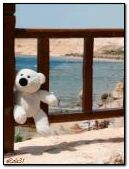 White bear on the beach