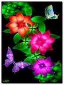 Colourful butterflies and flowers 3