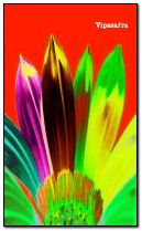Rainbow Flower240x400