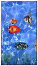 Living Aquarium