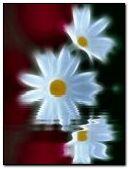 Water & flower